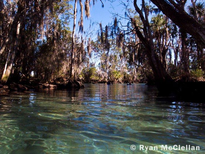 Manatee Species Profile | U.S. Fish and Wildlife Service